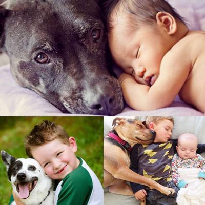 малыши и собаки